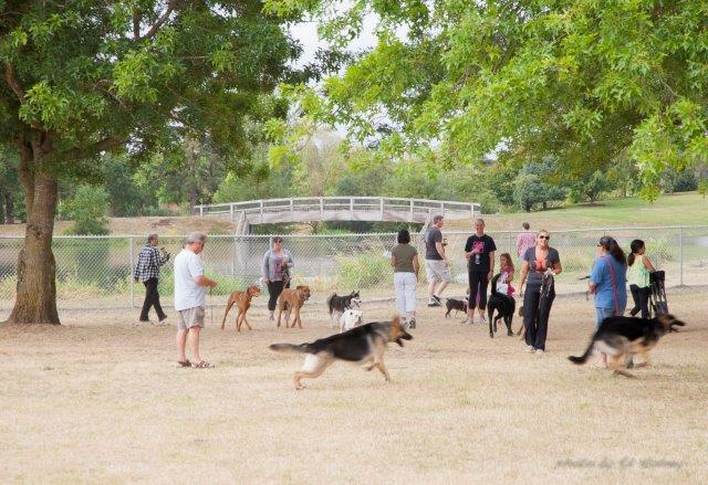 Albany dog park celebration Aug2614-5